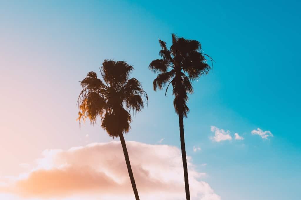Sumer - Palm Tree