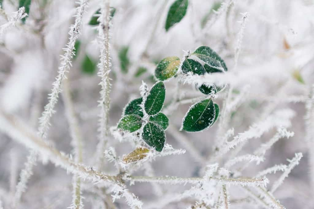 Winter - Leaf with snow