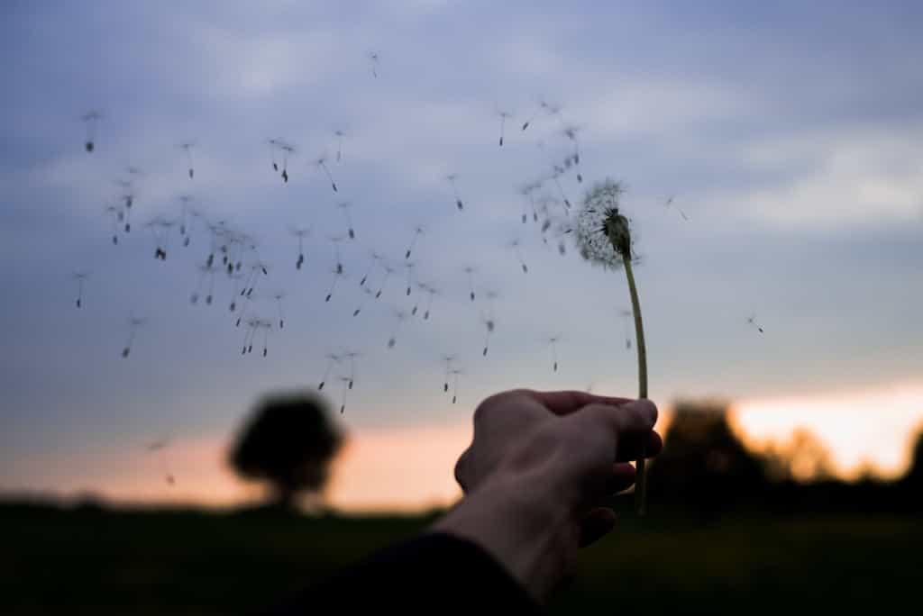 風に飛ばされるたんぽぽのタネ